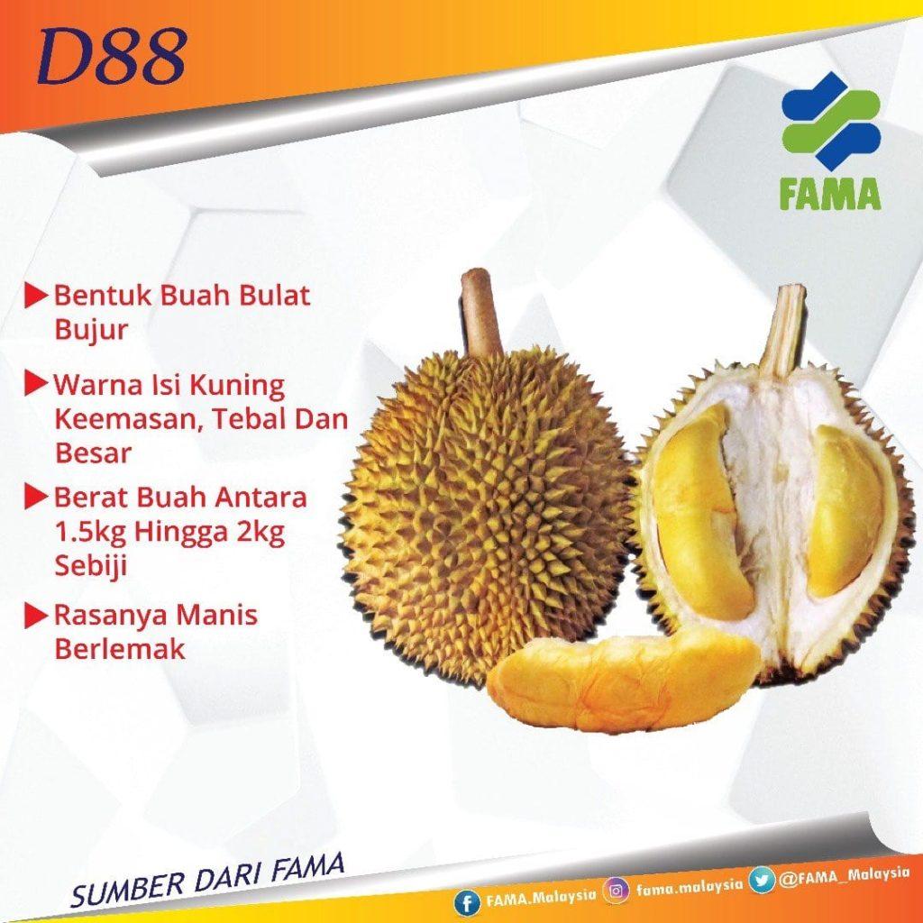 jenis D88