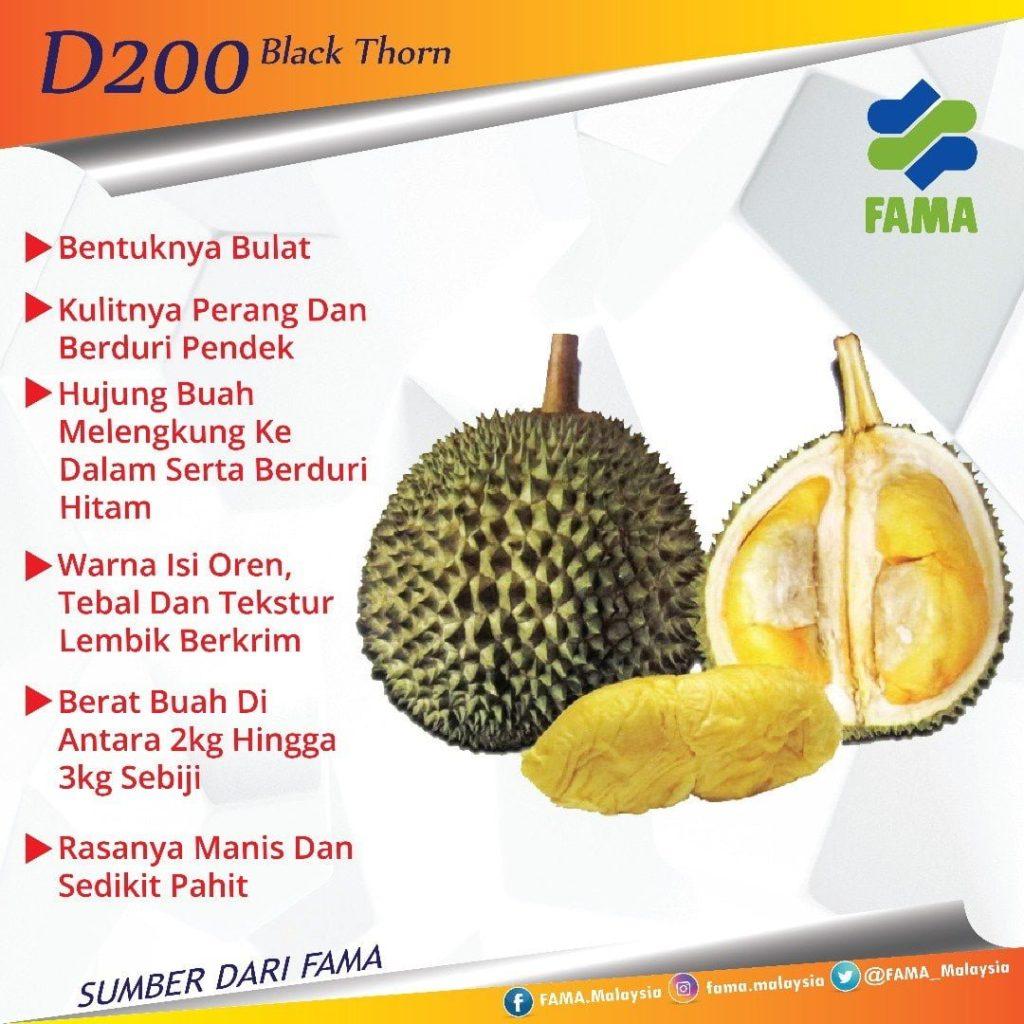 jenis D200, durian Duri Hitam