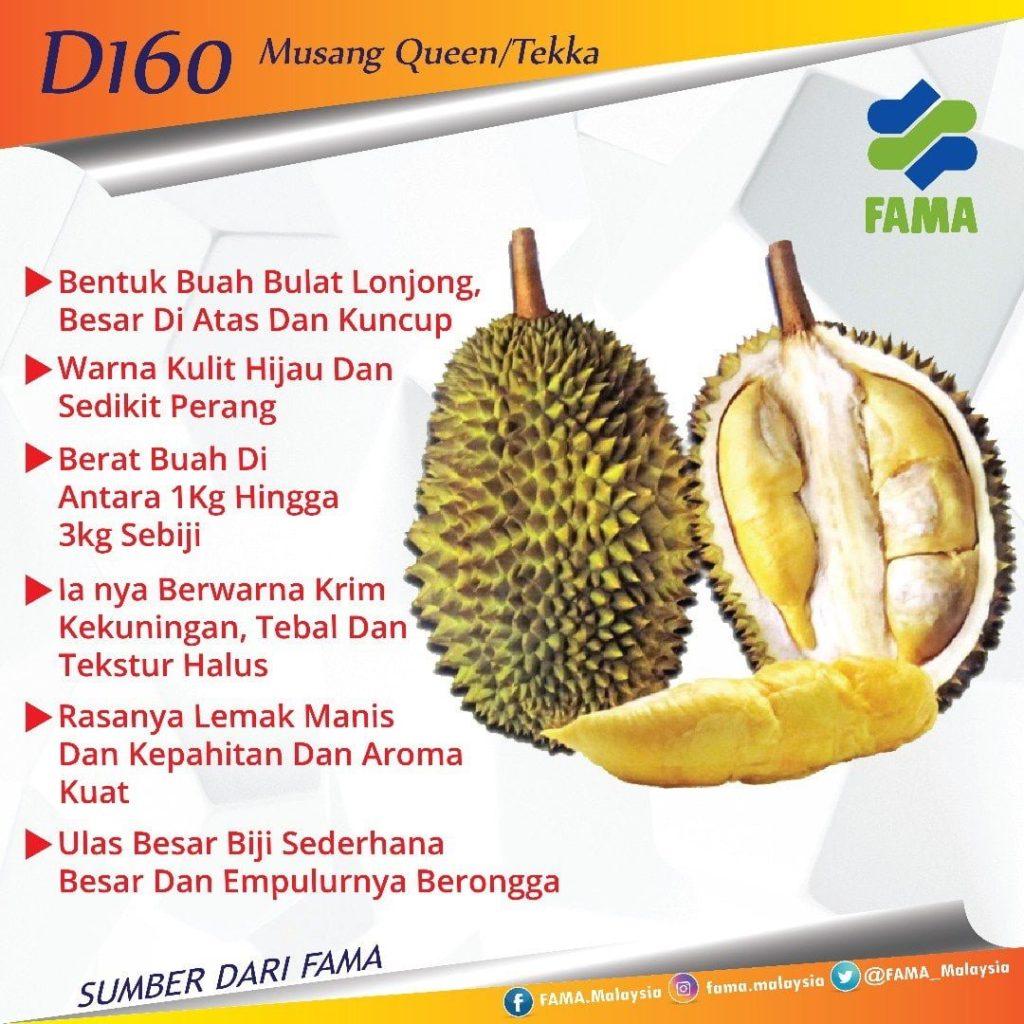 durian jenis Tekka