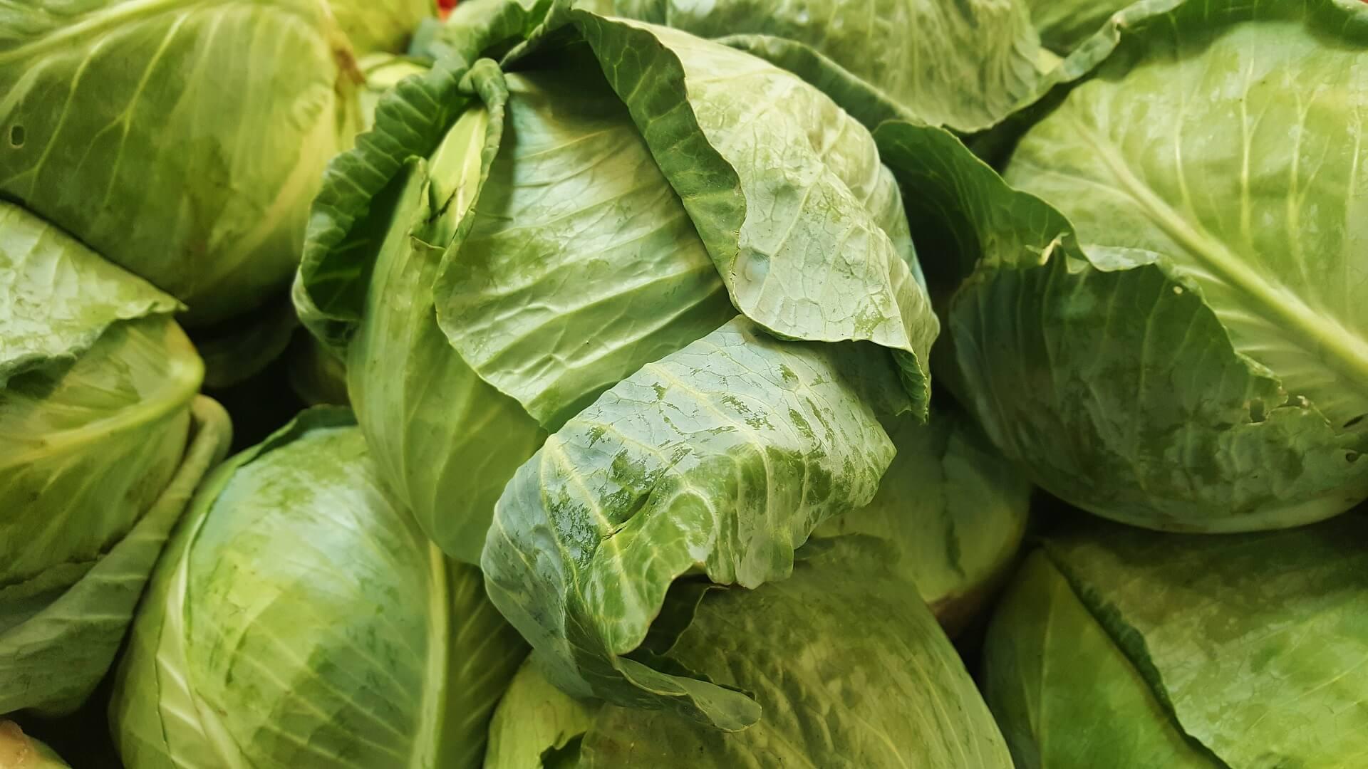 khasiat sayur kubis