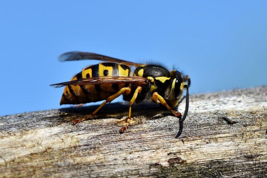 alahan sengatan serangga