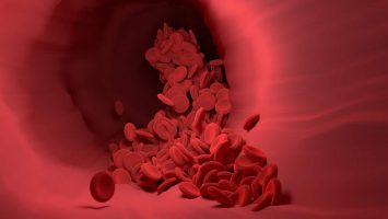 salur darah