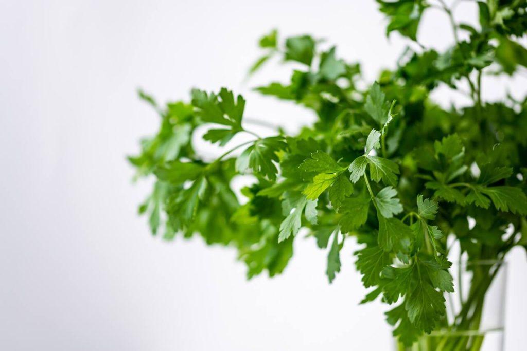 khasiat daun parsley