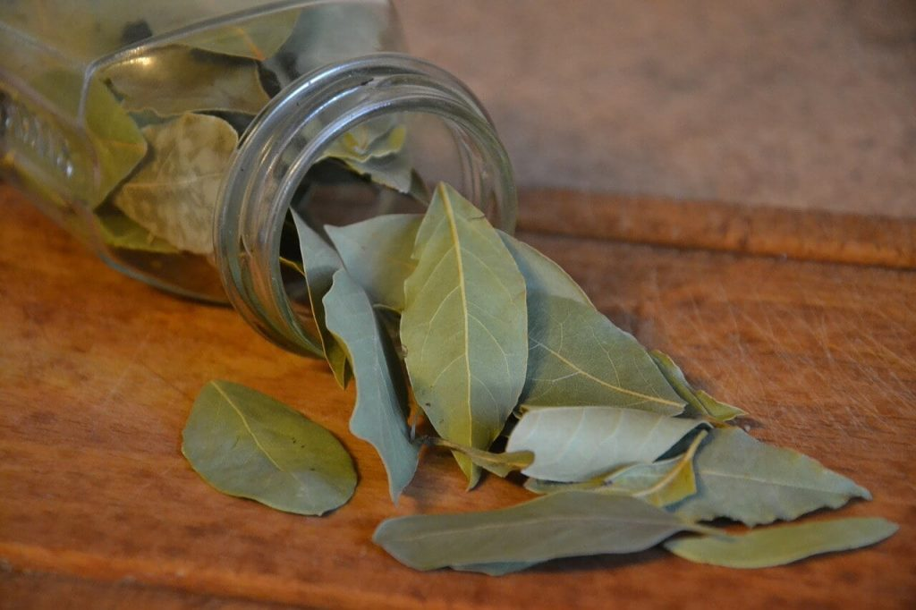 khasiat daun bay