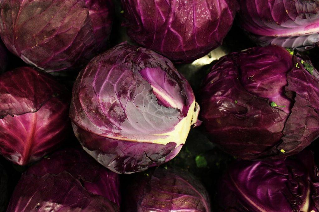 khasiat kubis ungu atau kubis merah