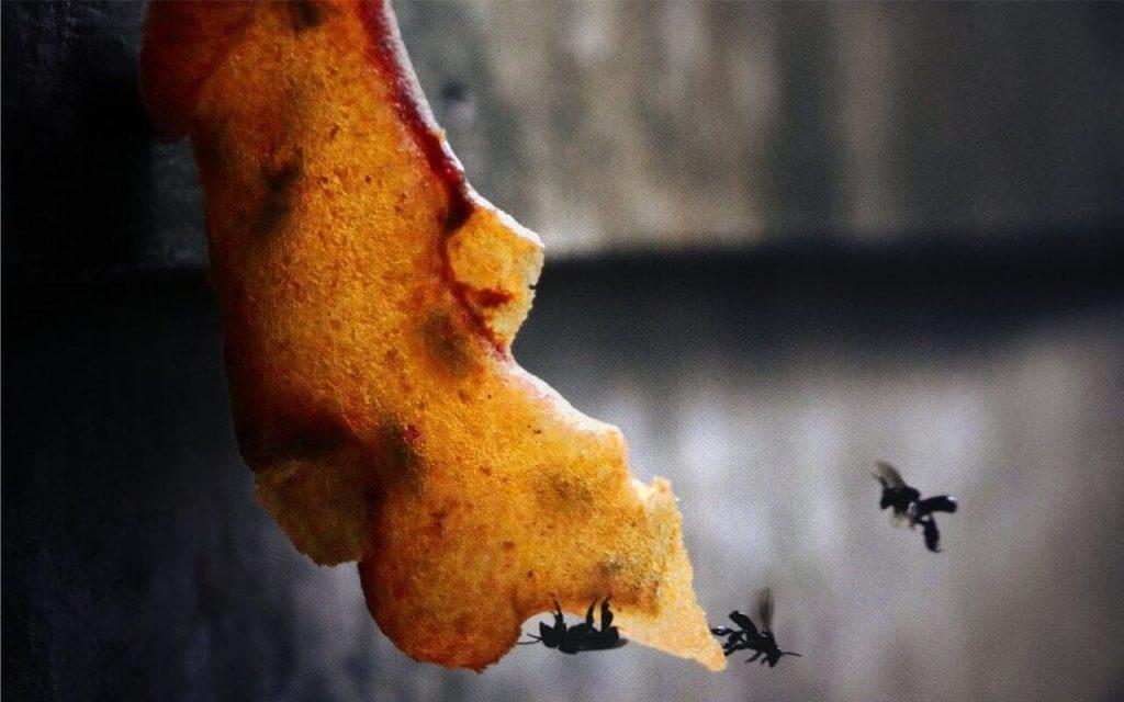 khasiat madu kelulut