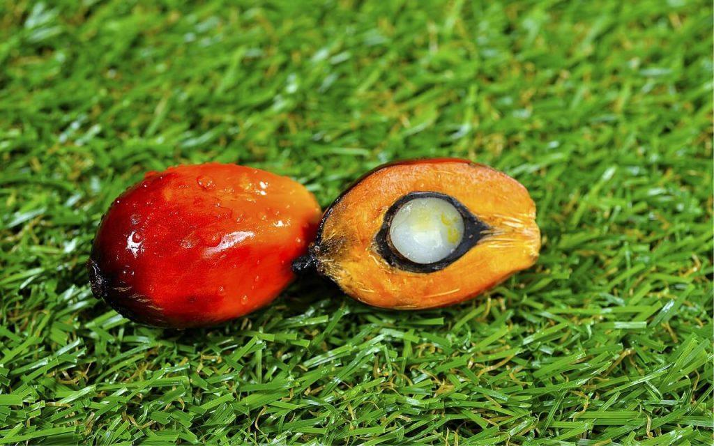 Khasiat minyak sawit-buah kelapa sawit