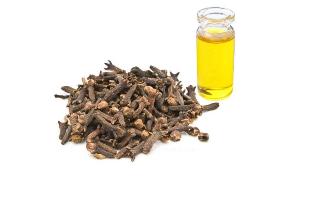 minyak pati bunga cengkih
